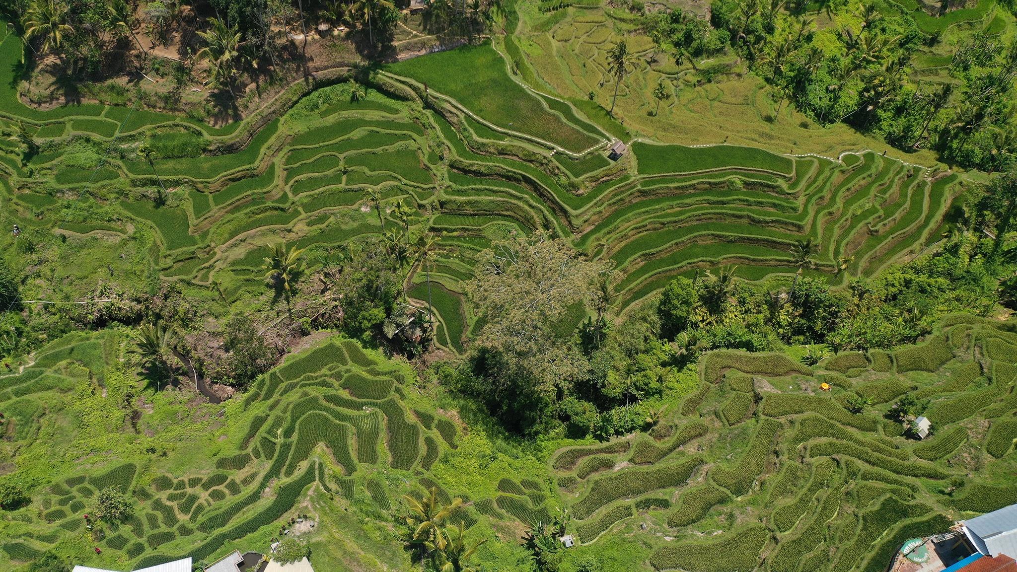 Nhung ngay duoi bat mat troi lan o Bali hinh anh 24