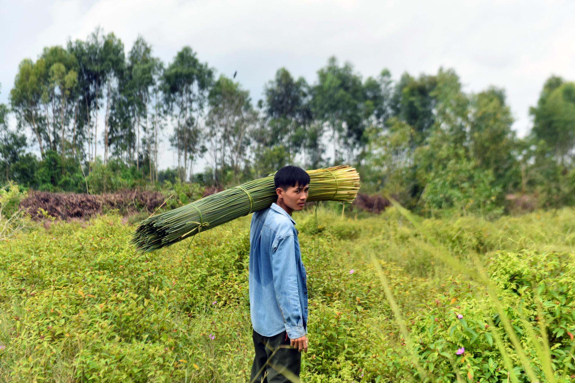Chang nong dan 'khung' va giac mo ong hut tre hinh anh 1