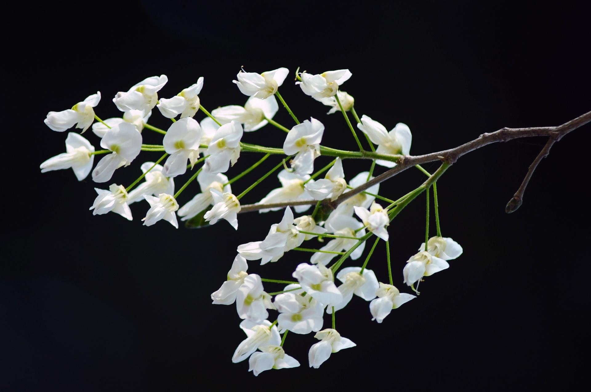 Nhung mua hoa Ha thanh ngap tran cam xuc hinh anh 48