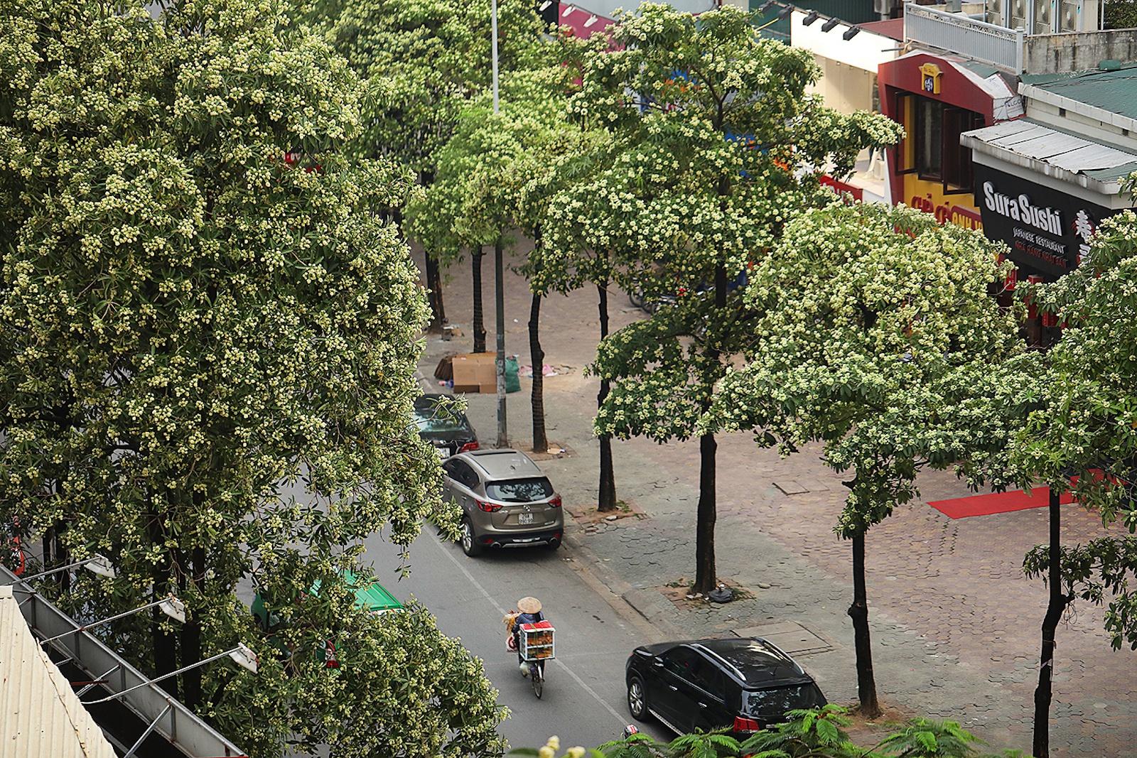 Nhung khoanh khac mua thu Ha Noi lay dong long nguoi hinh anh 3
