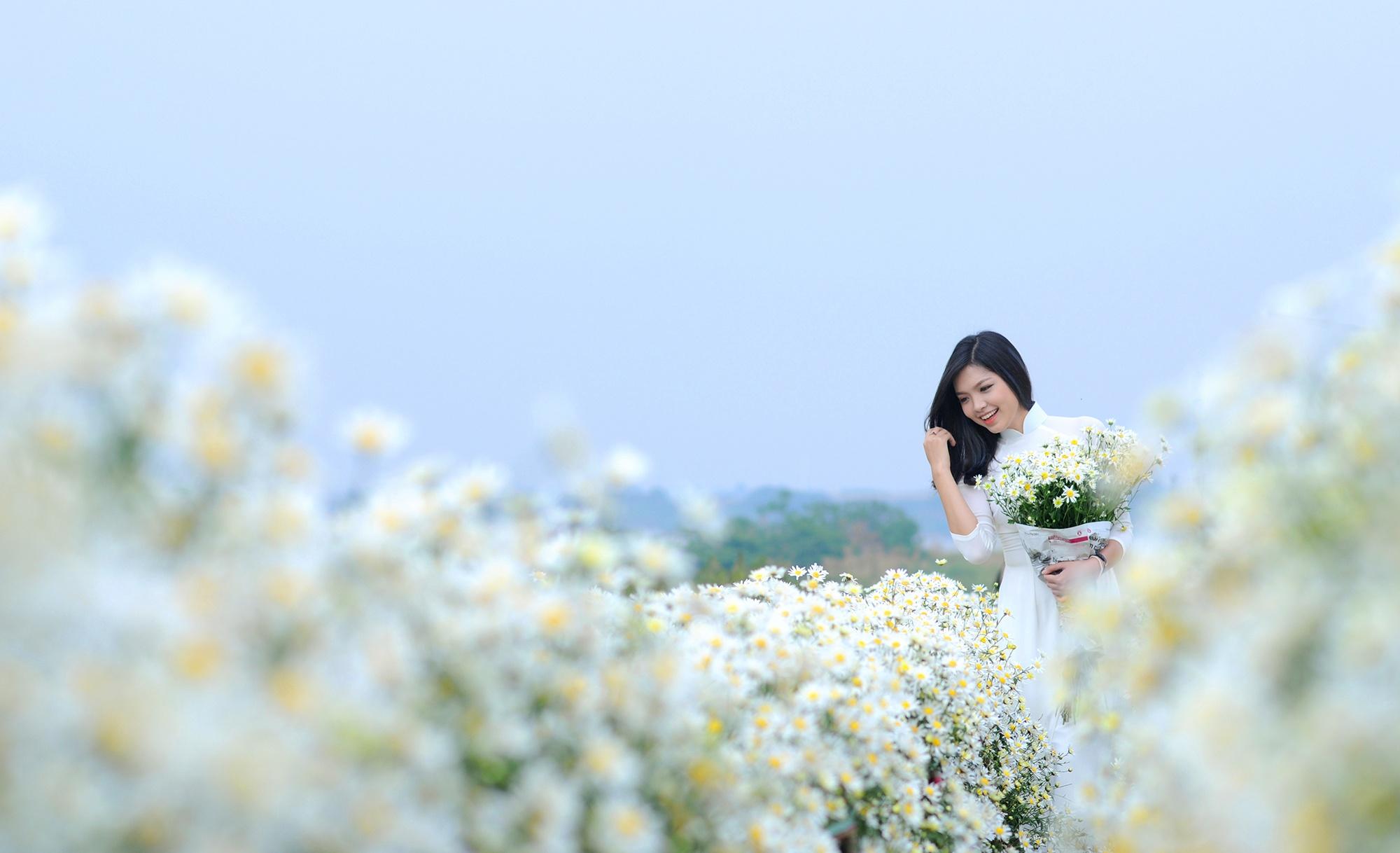 Xuyen xao mua cuc hoa mi don dong ve giua long Ha Noi hinh anh 1