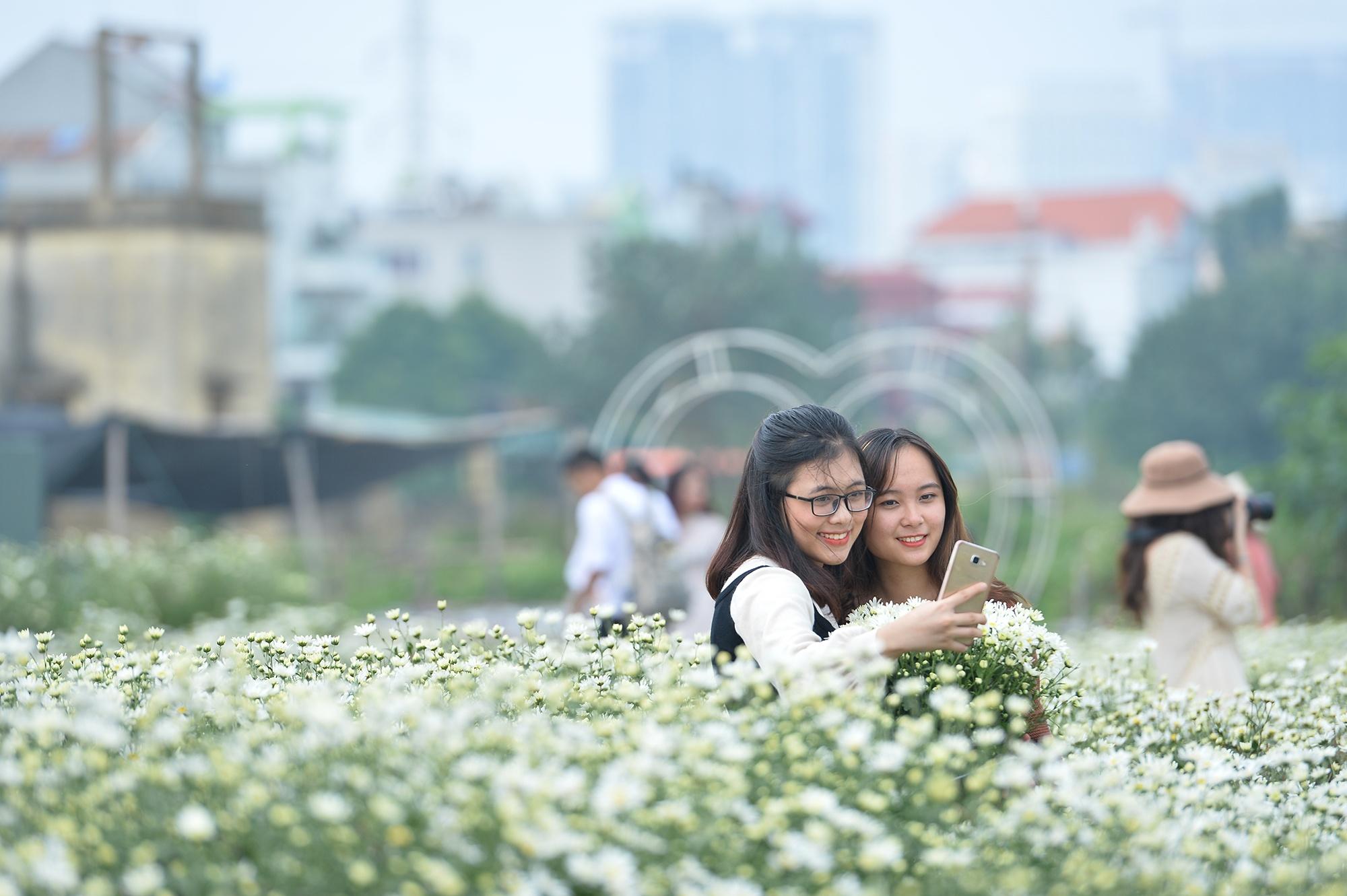 Xuyen xao mua cuc hoa mi don dong ve giua long Ha Noi hinh anh 30