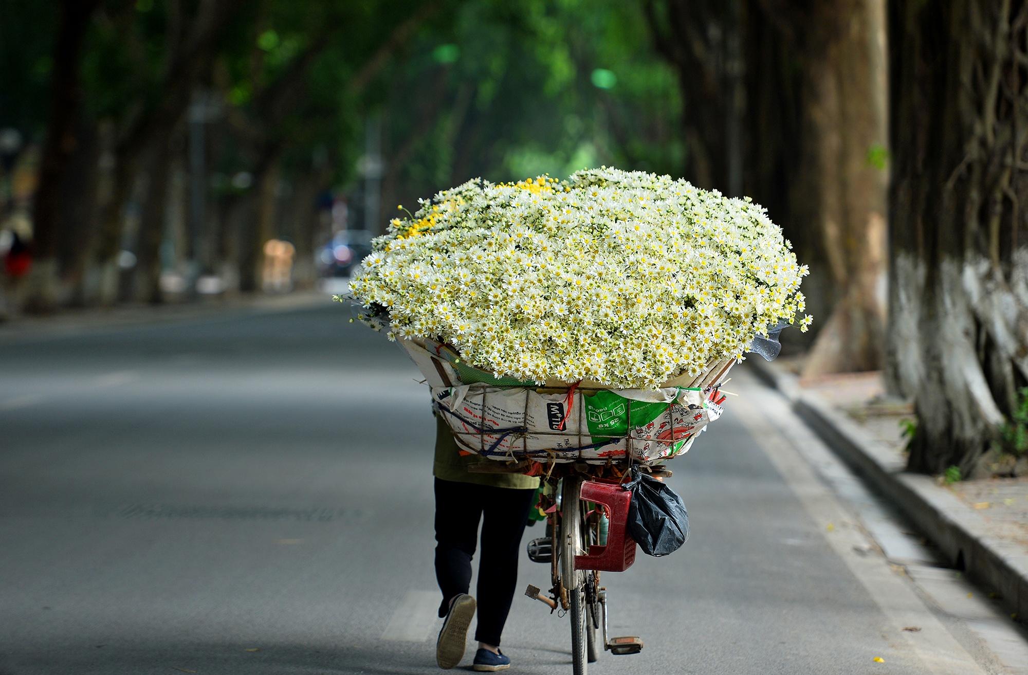 Xuyen xao mua cuc hoa mi don dong ve giua long Ha Noi hinh anh 34