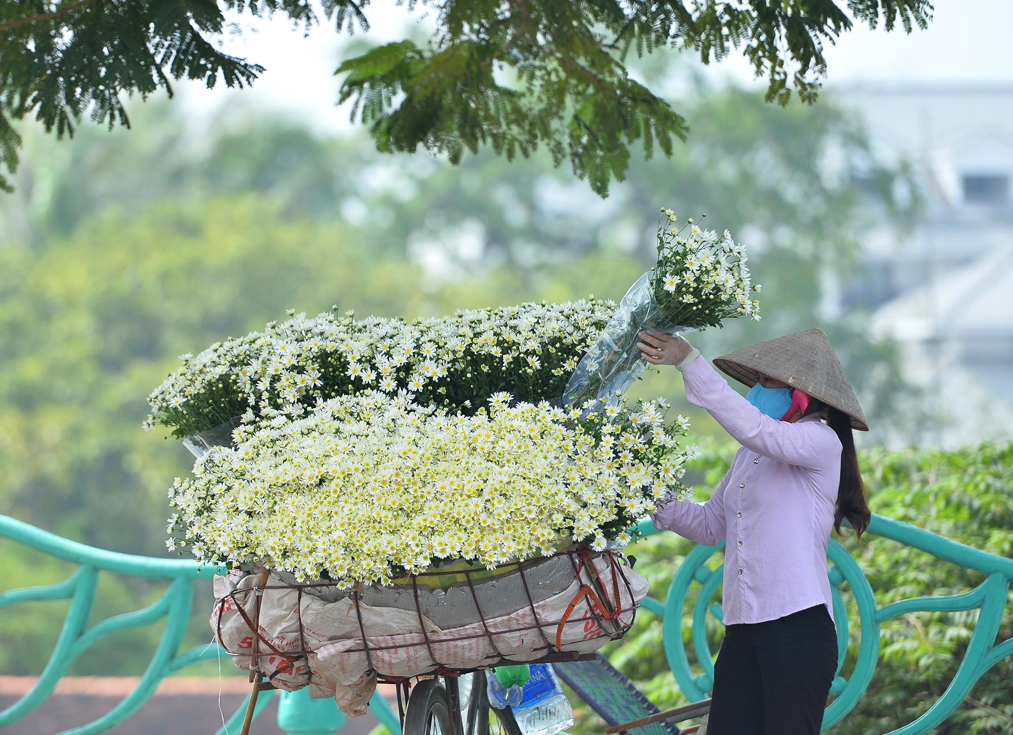 Xuyen xao mua cuc hoa mi don dong ve giua long Ha Noi hinh anh 35