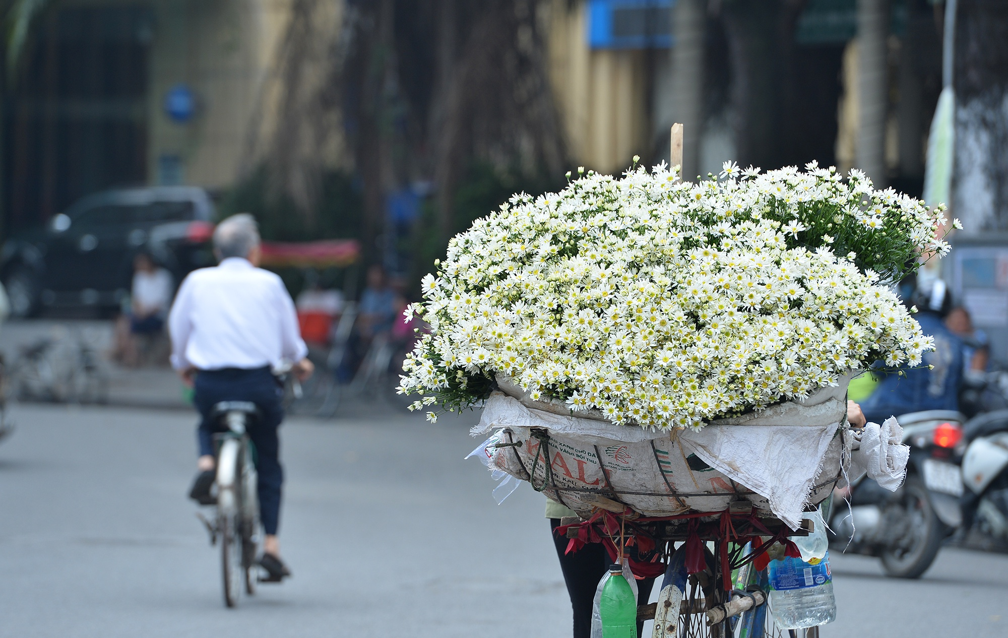Xuyen xao mua cuc hoa mi don dong ve giua long Ha Noi hinh anh 36