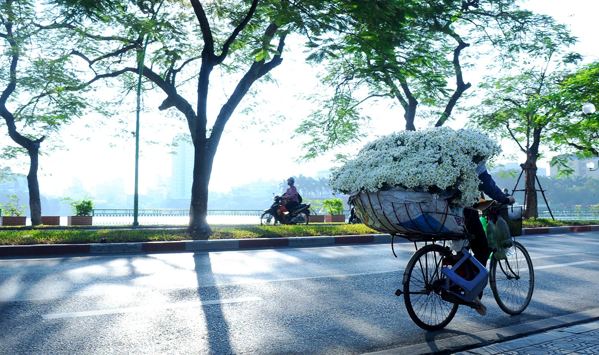 Xuyen xao mua cuc hoa mi don dong ve giua long Ha Noi hinh anh 39