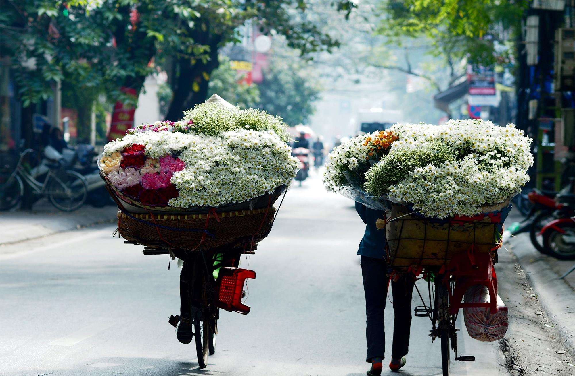 Xuyen xao mua cuc hoa mi don dong ve giua long Ha Noi hinh anh 22