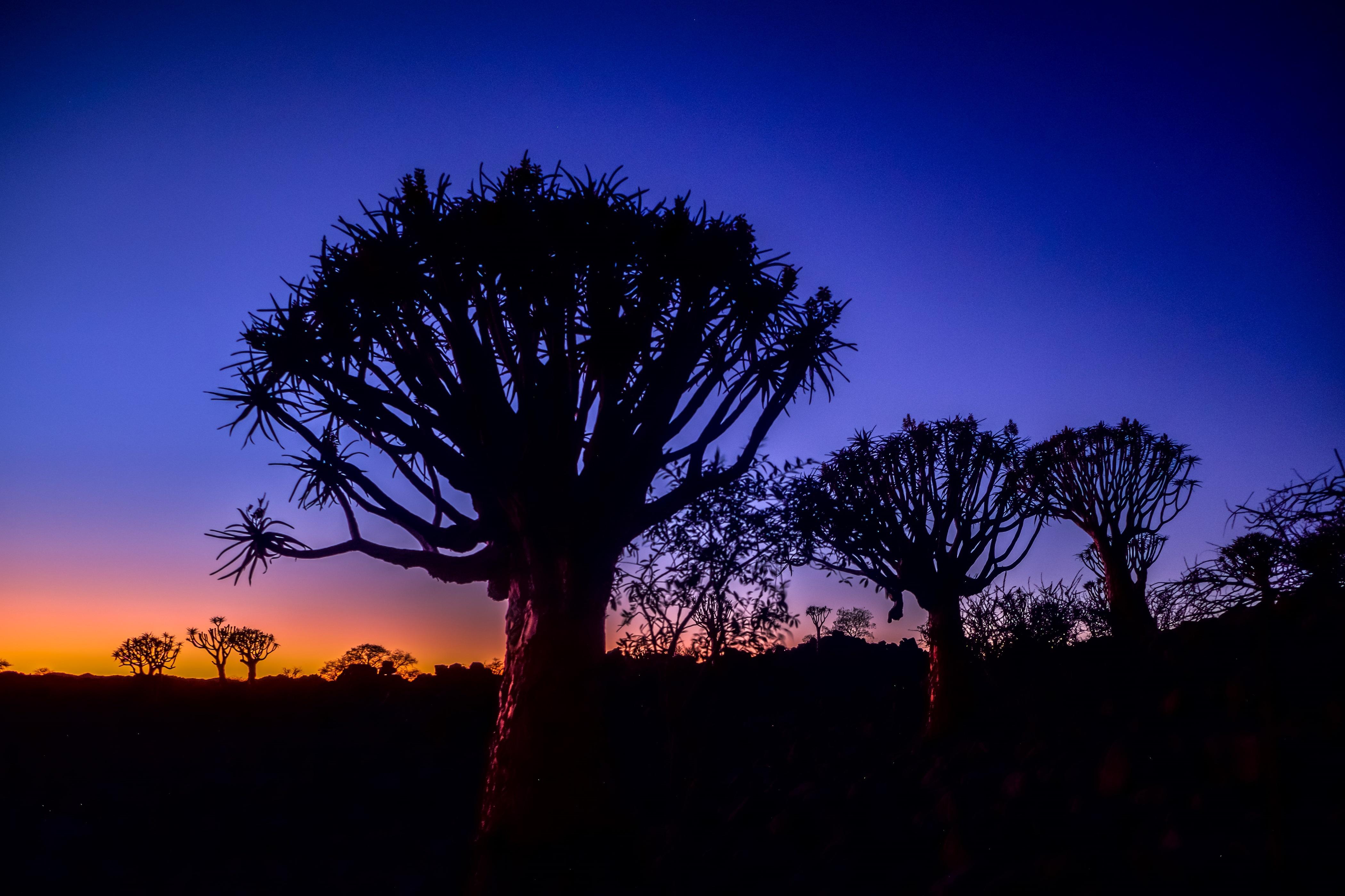 Namibia - den tham thung lung chet, thanh pho ma va dieu khong tuong hinh anh 27