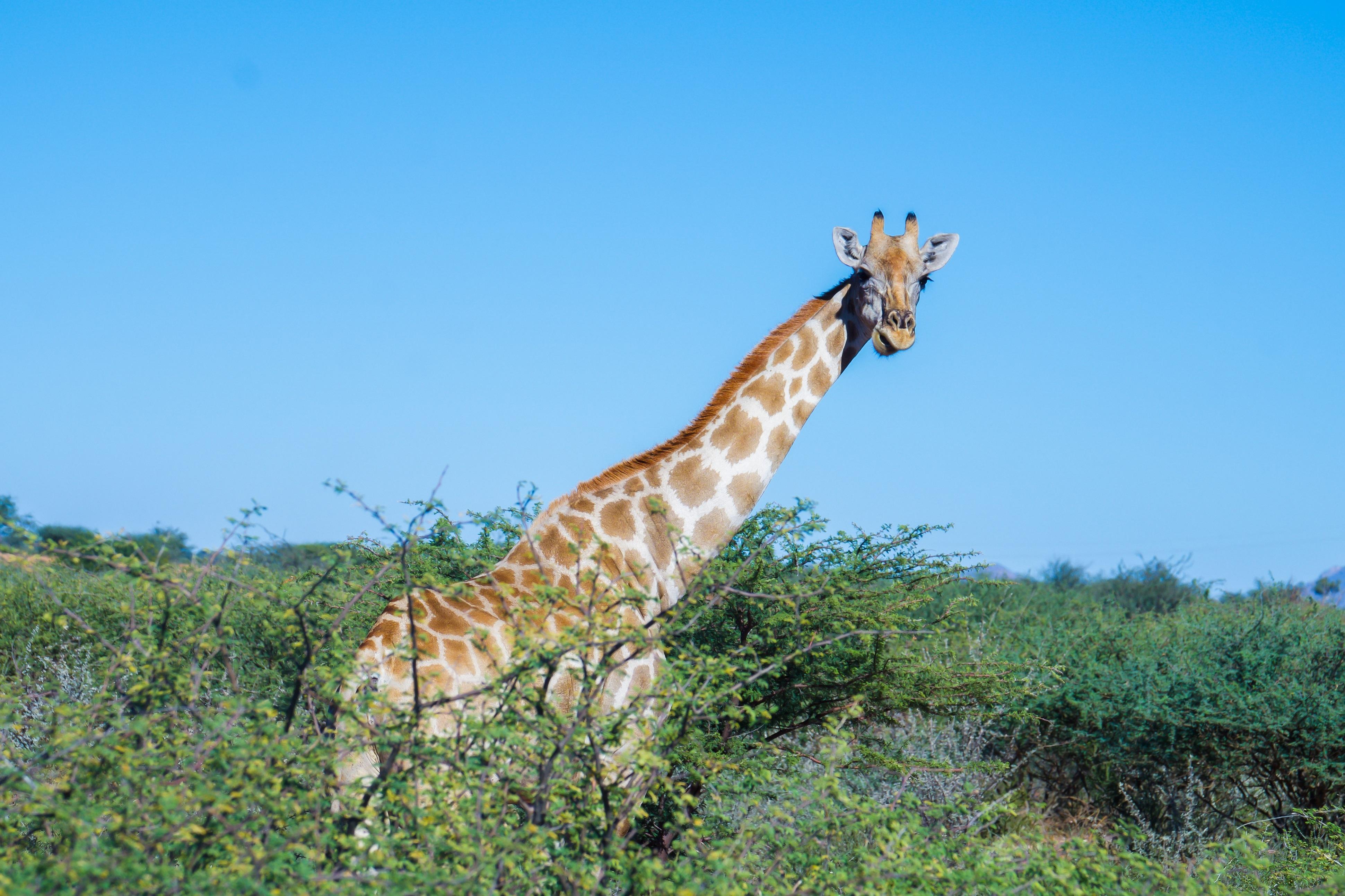 Namibia - den tham thung lung chet, thanh pho ma va dieu khong tuong hinh anh 28
