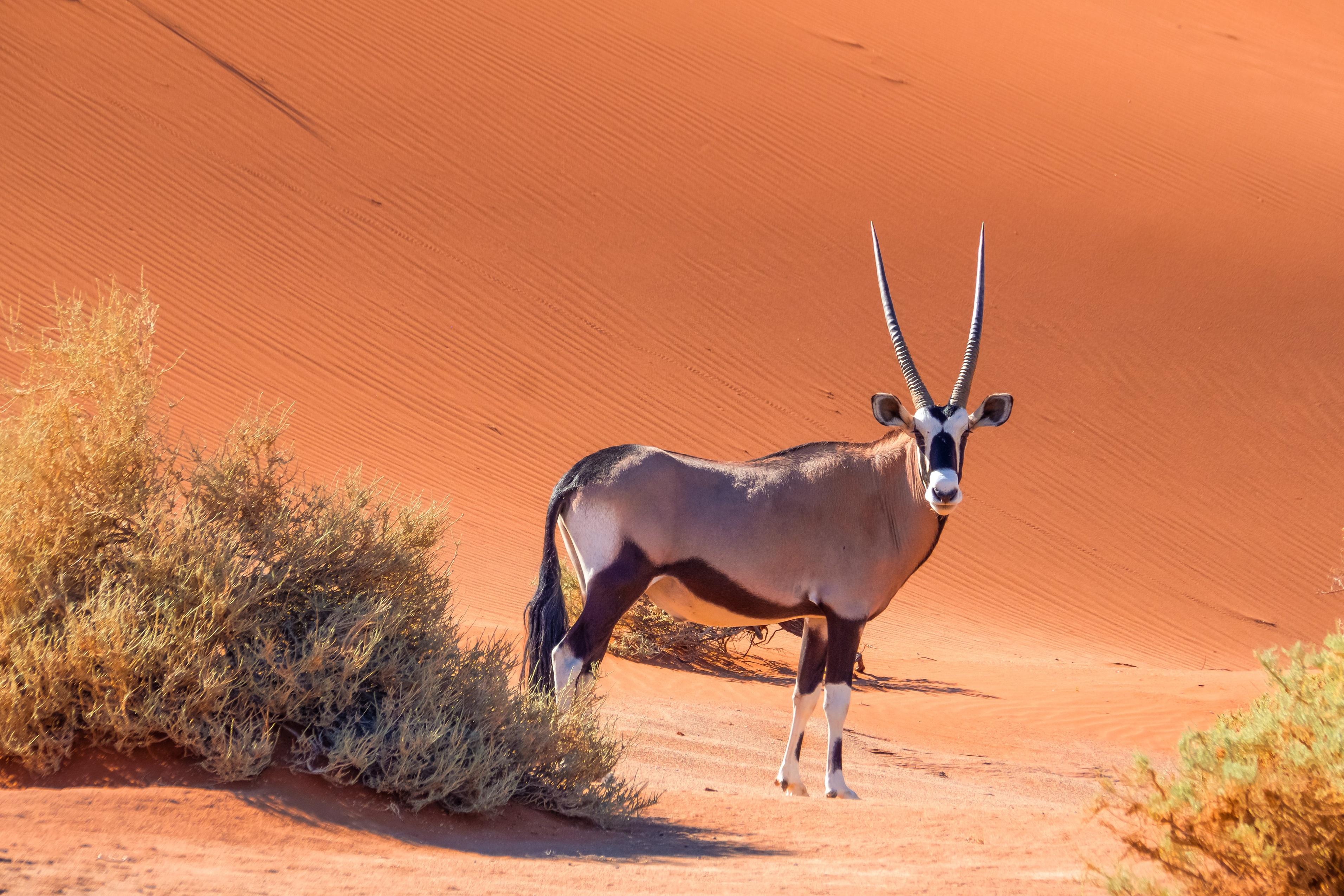 Namibia - den tham thung lung chet, thanh pho ma va dieu khong tuong hinh anh 42