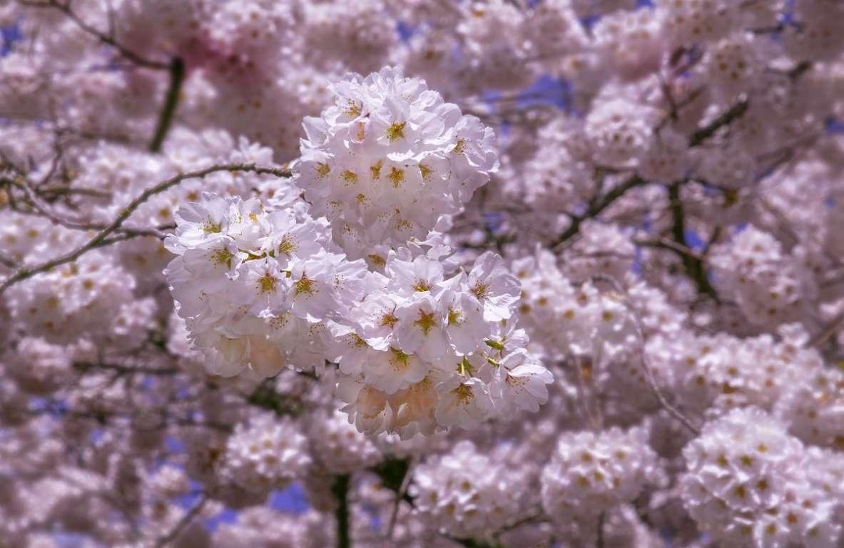 Anh dao no rop troi xu co hoa hinh anh 21 hoa17.jpg