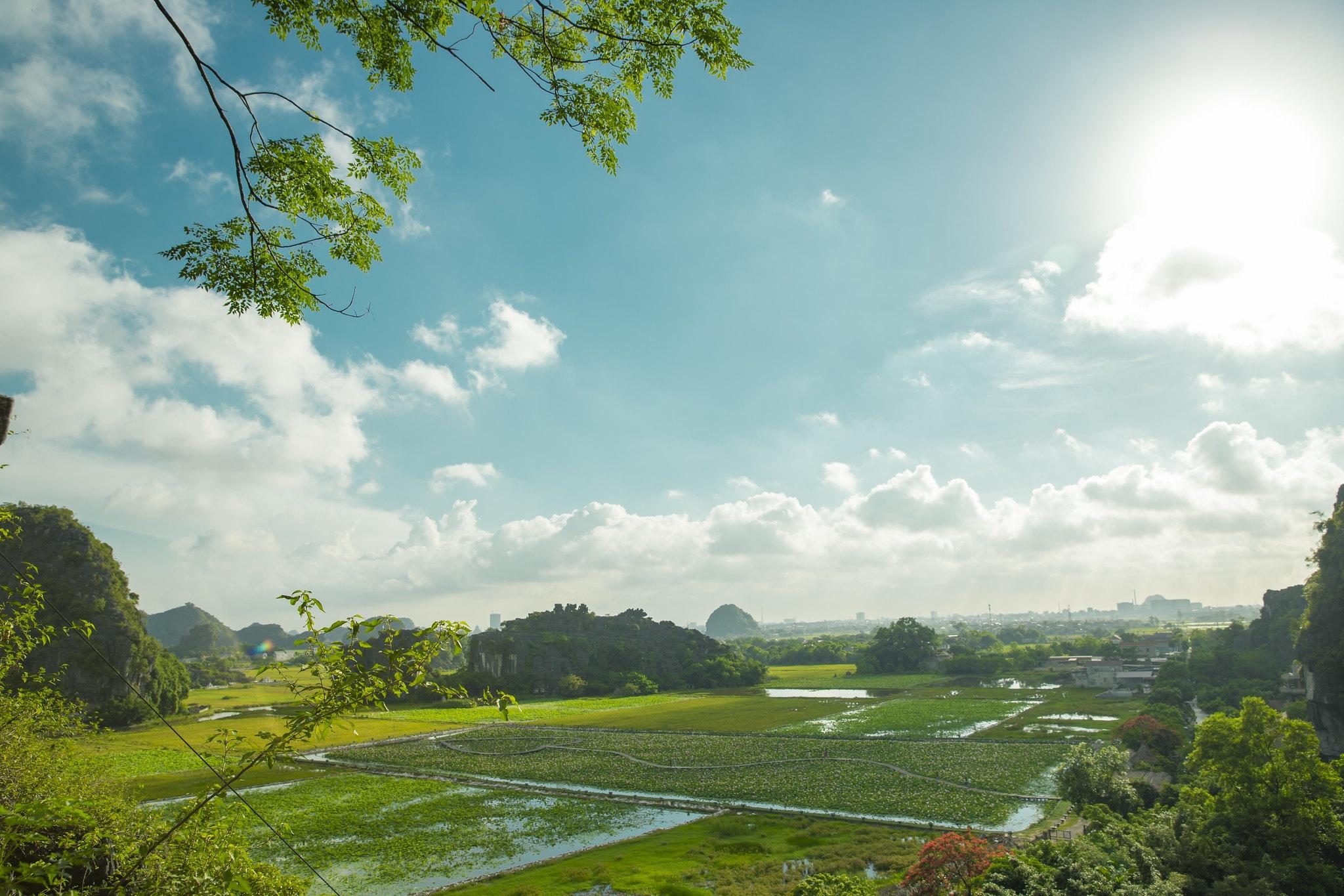 Cảnh đẹp ở cánh đồng sen Ninh Bình - Ảnh 2.