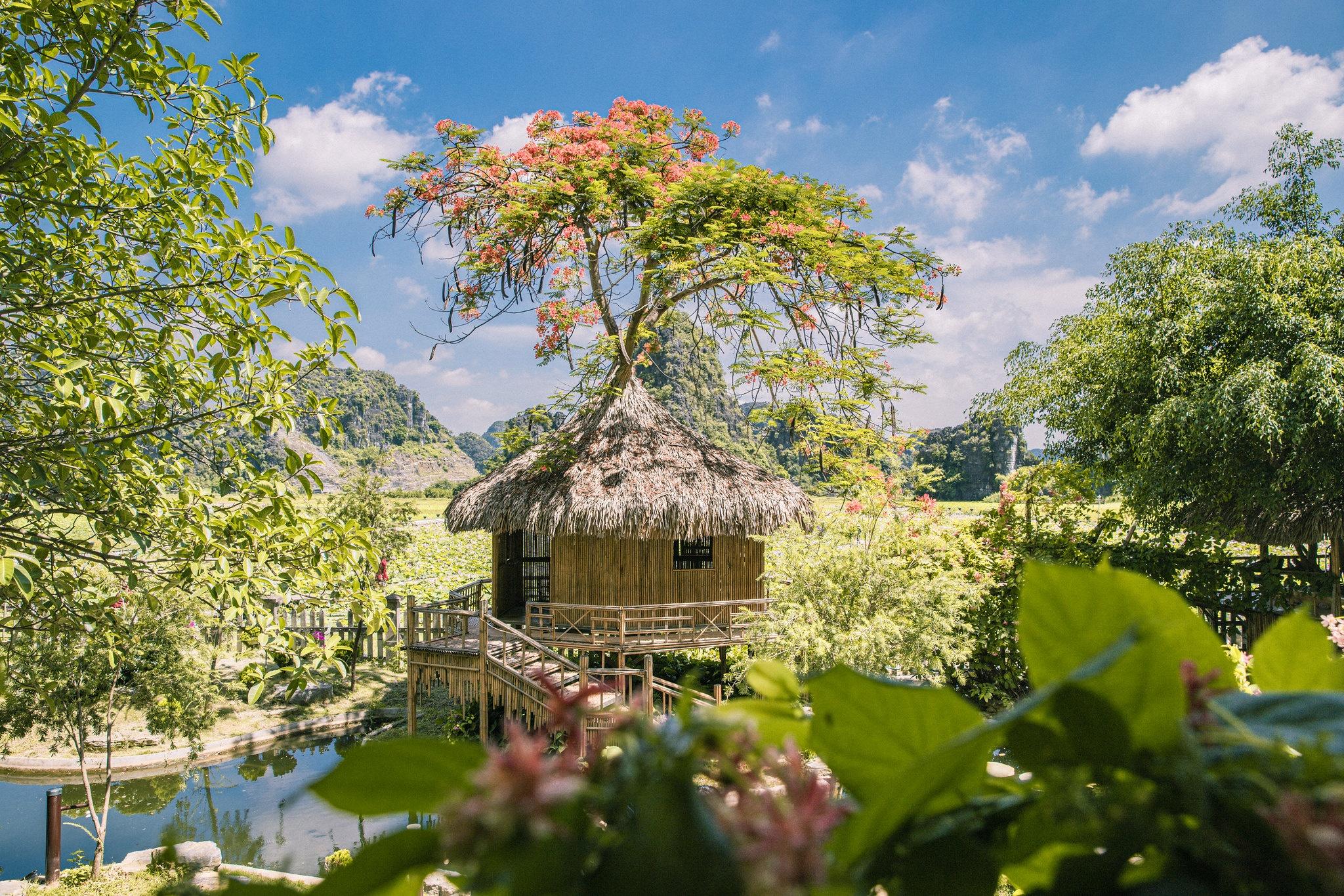 Cảnh đẹp ở cánh đồng sen Ninh Bình - Ảnh 11.