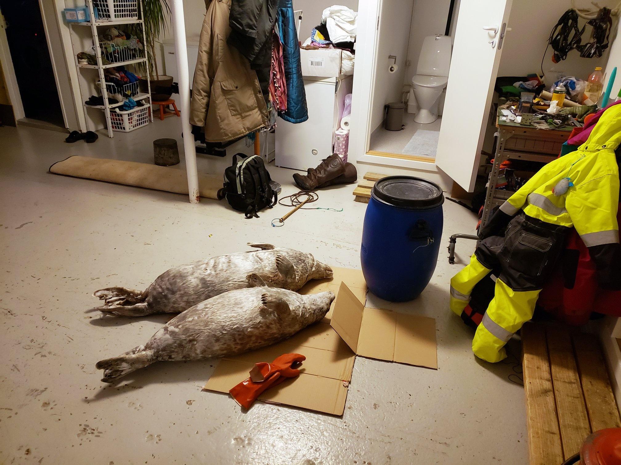 Cau chuyen Greenland va vung dat cuc Bac bi lang quen hinh anh 25