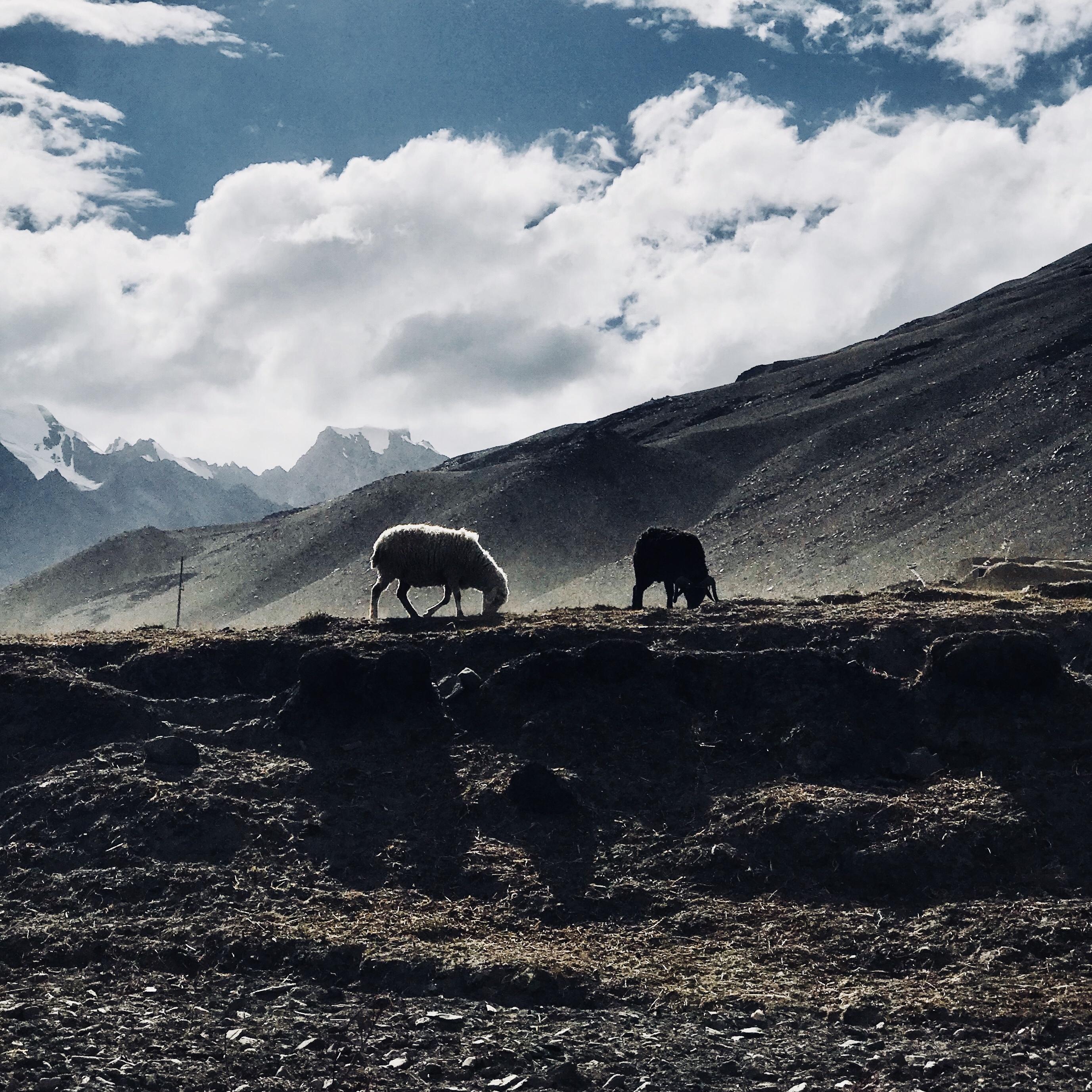 Duong den Ladakh - hanh trinh danh cho nhung doi chan khong biet moi hinh anh 12