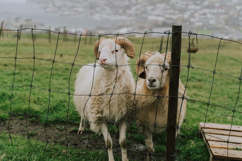 Cuoc song giau co o hon dao quanh nam mua bao hinh anh 2 Tu_Nguyen_Destination_Wedding_Photographer_Faroe_Islands_Elopement_Fiona_Alexia_181.jpg