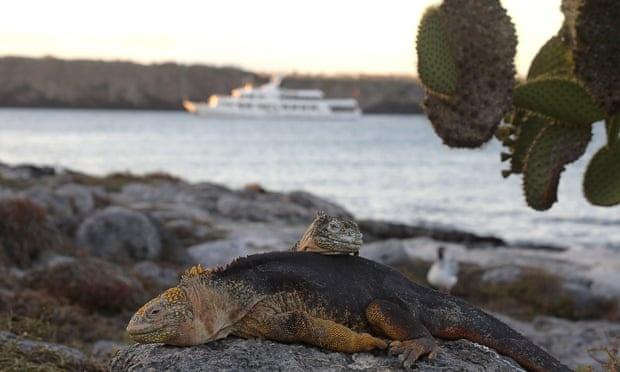 bao ton quan dao Galapagos anh 3
