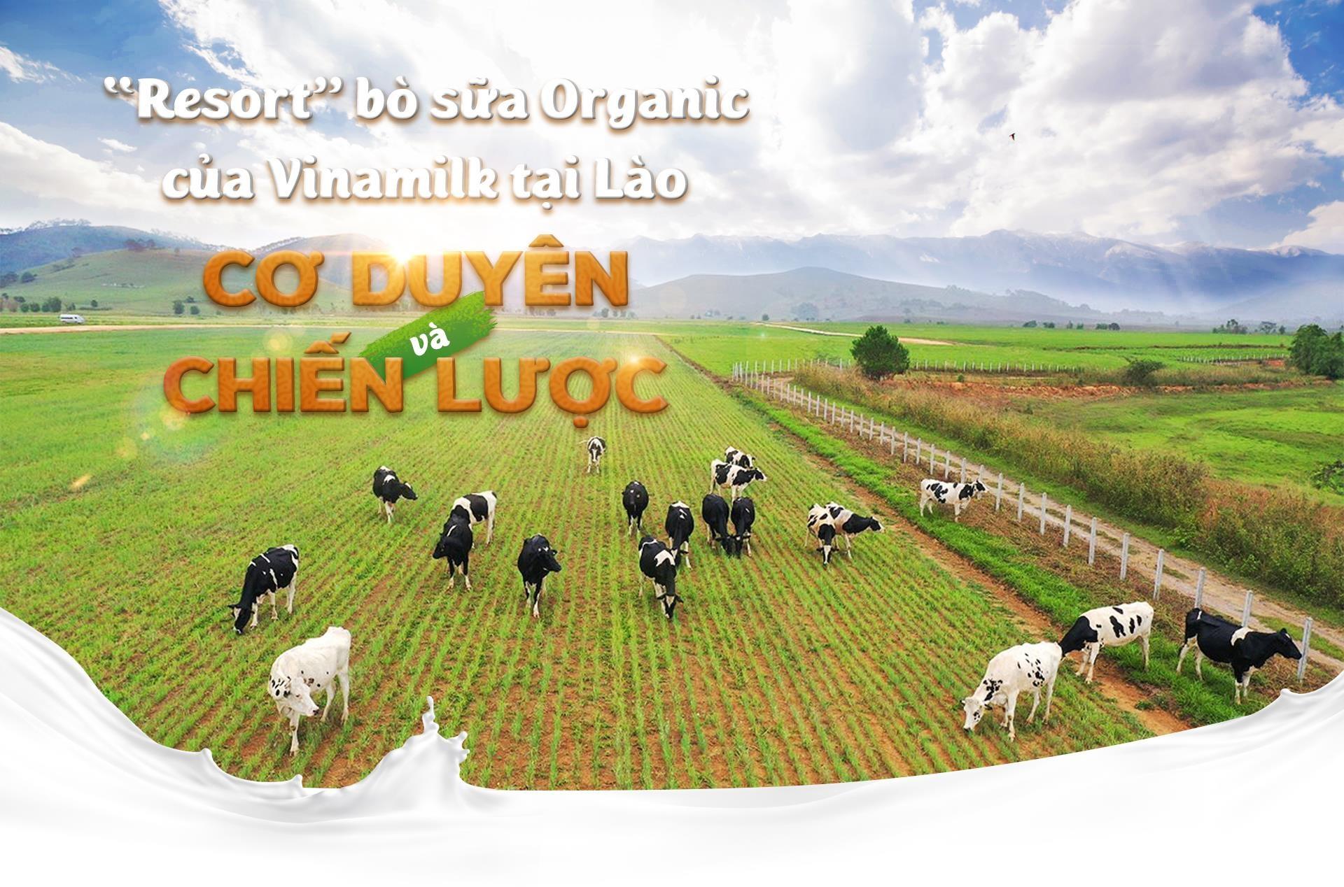 'Resort' bo sua organic cua Vinamilk tai Lao - co duyen va chien luoc hinh anh 2