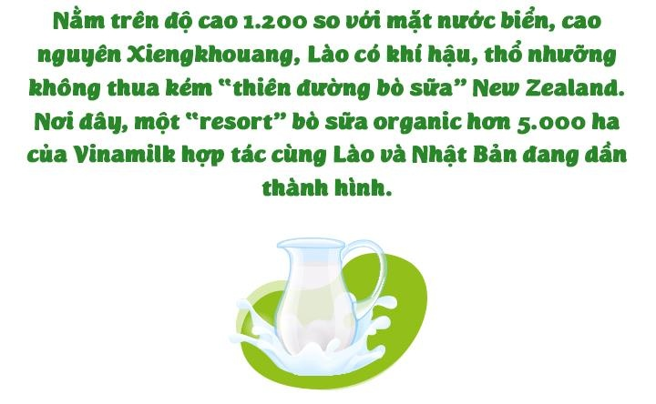 'Resort' bo sua organic cua Vinamilk tai Lao - co duyen va chien luoc hinh anh 3