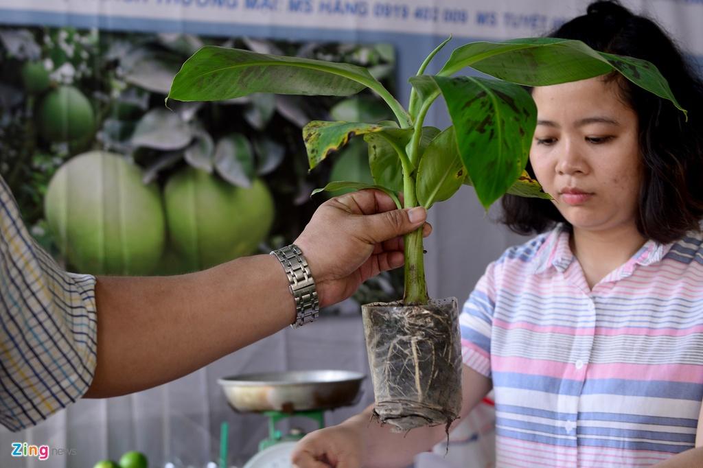 Chuoi khong lo tai hoi cho nong nghiep Sai Gon hinh anh 7