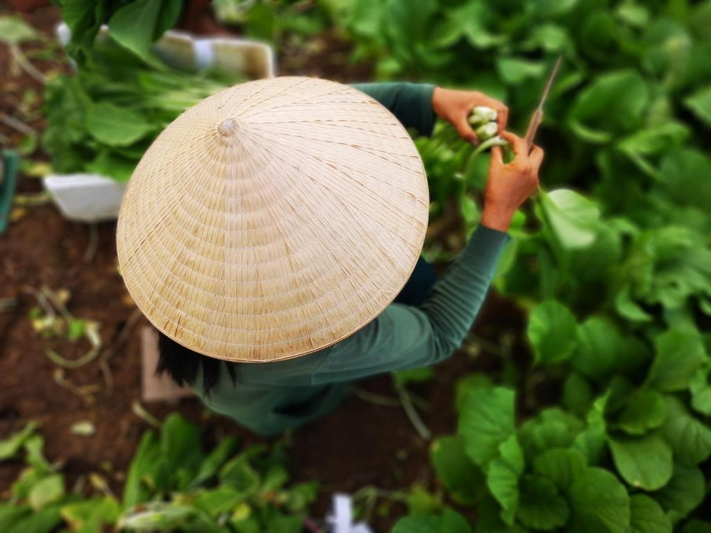 tac nghiep cuoc thi Thanh pho Ho Chi Minh 2018 anh 4