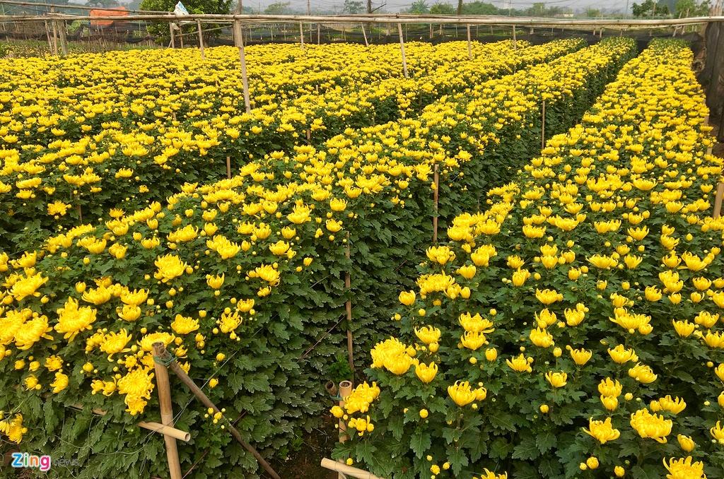 Hoa tuoi Viet Nam canh tranh hoa Trung Quoc anh 3