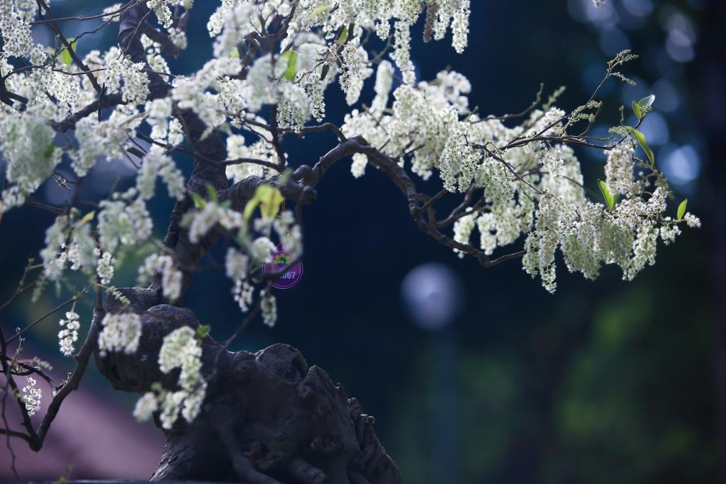 Ron rang khai mac hoi hoa xuan Tao Dan hinh anh 7
