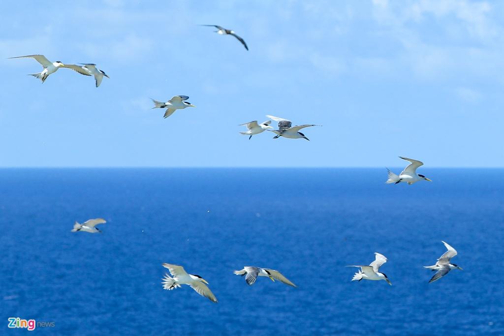 Hang nghin con chim nhan de trung o Hon Hai hinh anh 12