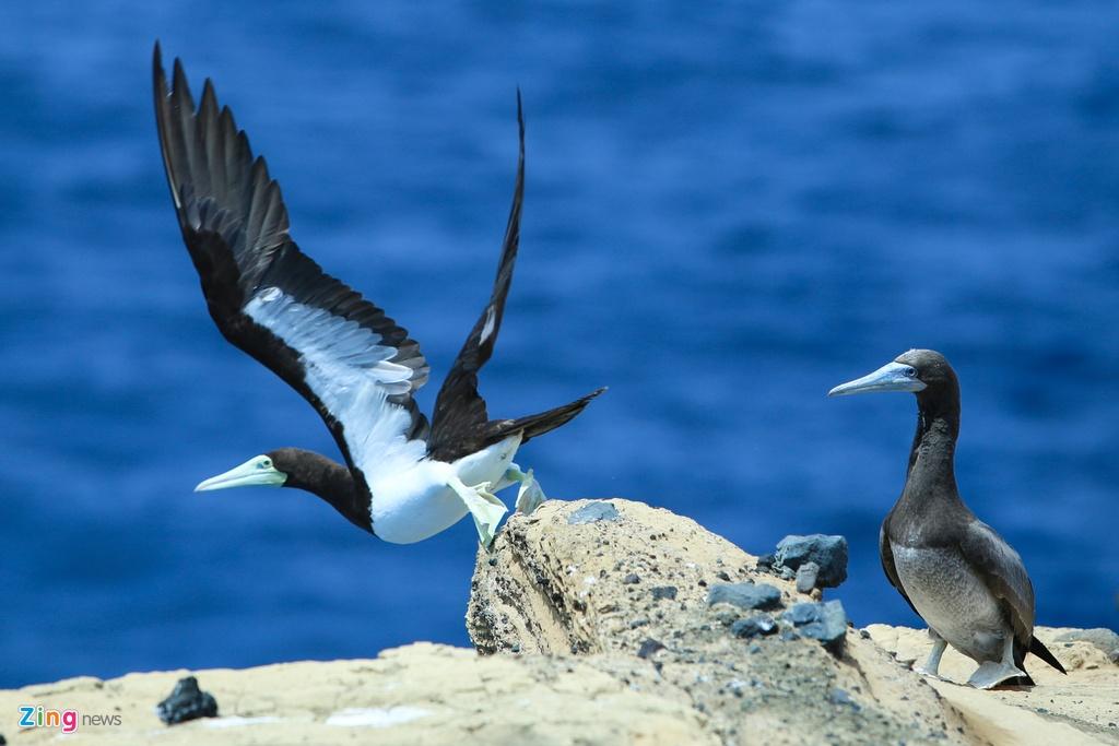 Hang nghin con chim nhan de trung o Hon Hai hinh anh 13
