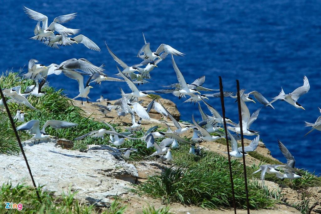 Hang nghin con chim nhan de trung o Hon Hai hinh anh 9