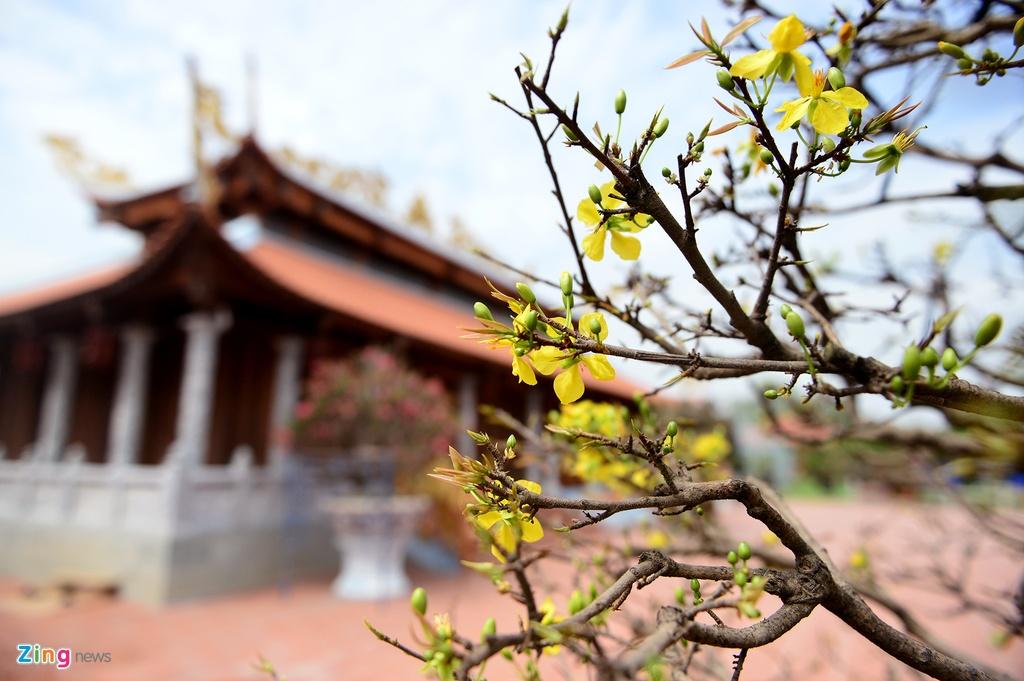 Nha tho To cua Hoai Linh don dep don Tet anh 8