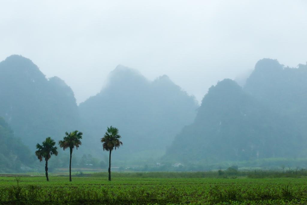 Nhung dia danh o Quang Binh lot vao may quay 'King Kong' hinh anh 11
