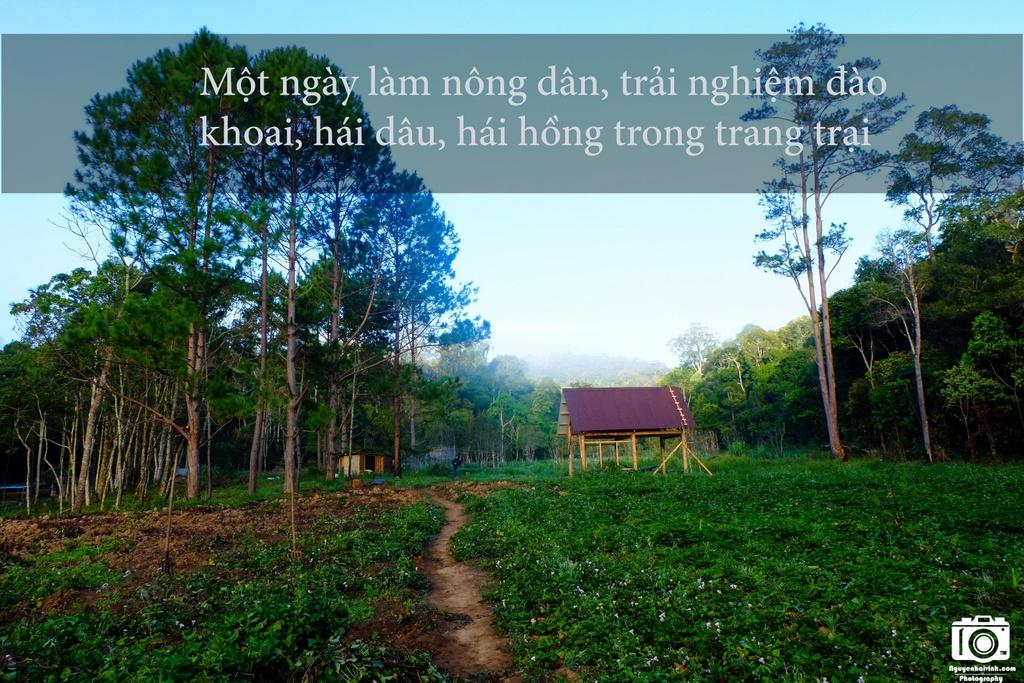 Nhung trai nghiem khong the bo qua dip 30/4 tai Da Lat hinh anh 10