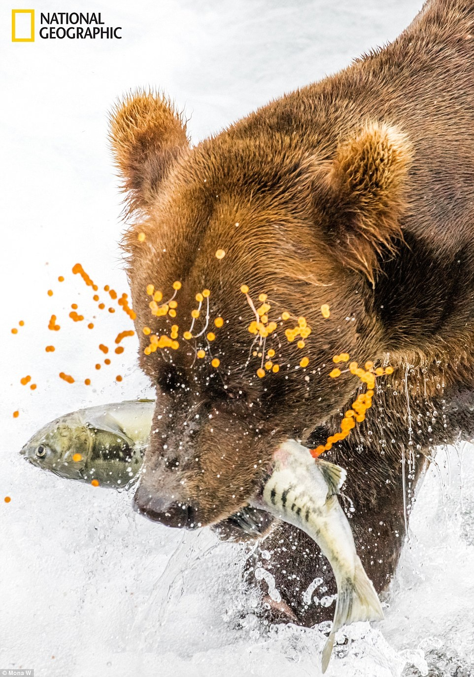 anh du thi National Geographic 2016 anh 2
