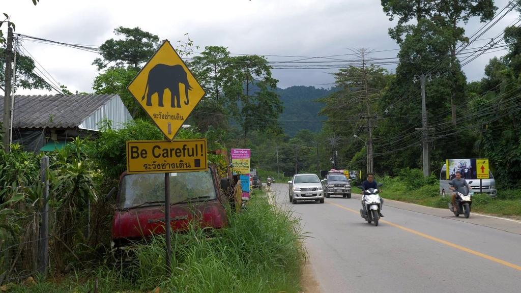 Voi chay rong bi xe tong, Thai Lan dau dau bao ve ca nguoi lan thu hinh anh 3