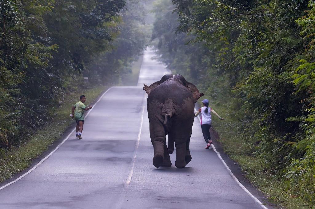 Voi chay rong bi xe tong, Thai Lan dau dau bao ve ca nguoi lan thu hinh anh 4