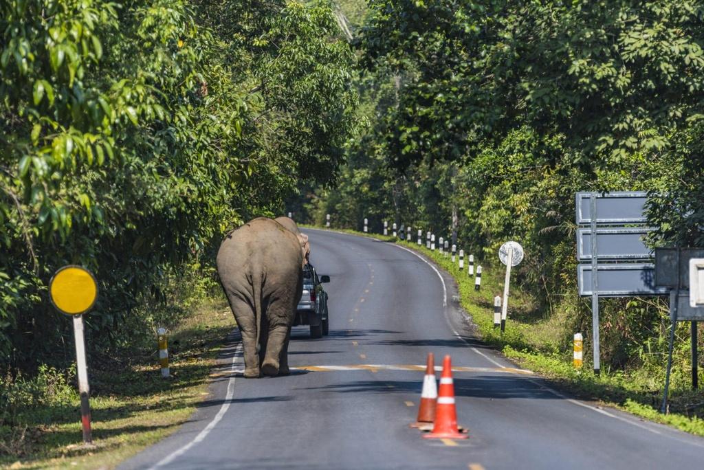 Voi chay rong bi xe tong, Thai Lan dau dau bao ve ca nguoi lan thu hinh anh 1