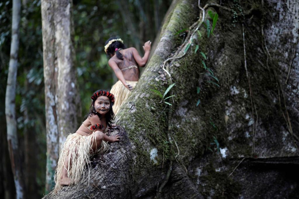 Bo lac Brazil nhay mua, cau nguyen de rung Amazon het chay hinh anh 12
