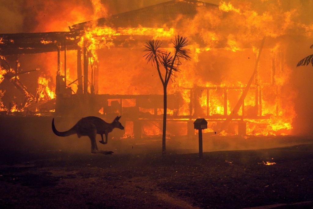 Dong vat Australia chet mon vi doi khat du song sot chay rung hinh anh 3 https_cdn.cnn.com_cnnnext_dam_assets_200102094458_10_australia_fires_1231_restricted_NYT.jpg