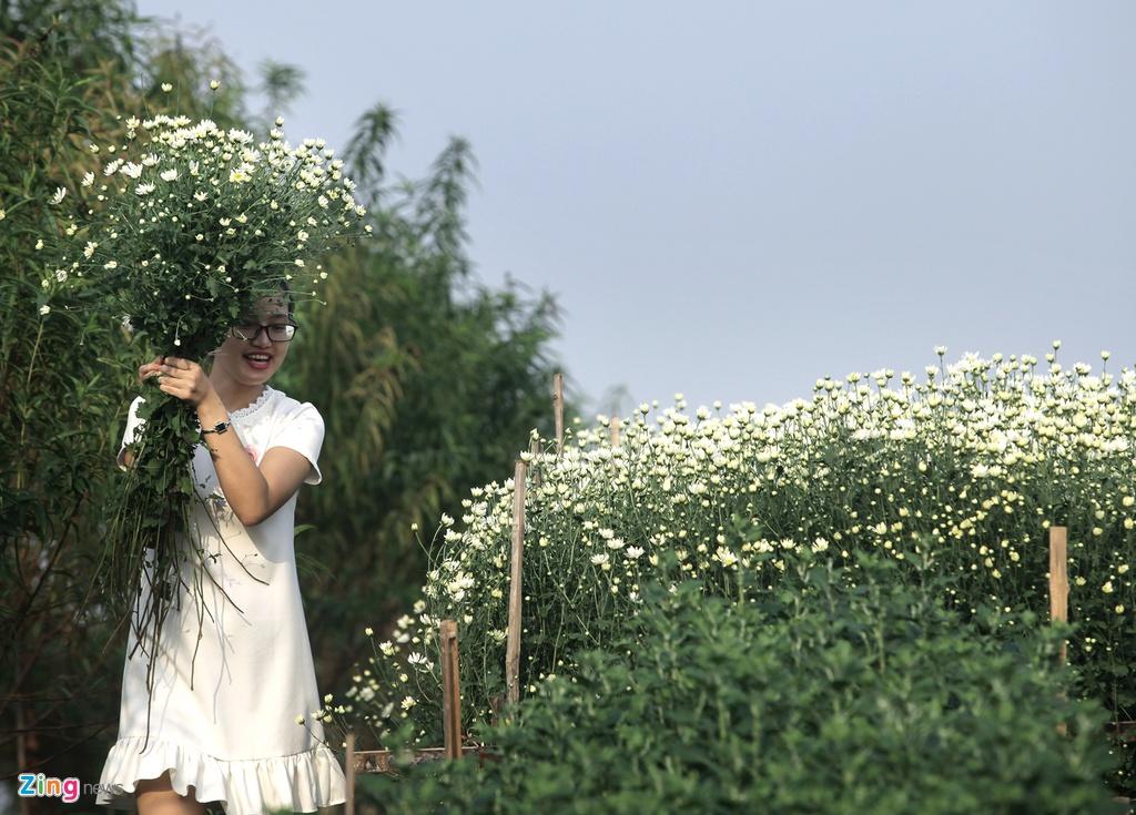 Cuc hoa mi no ro tu vuon ra pho hinh anh 10