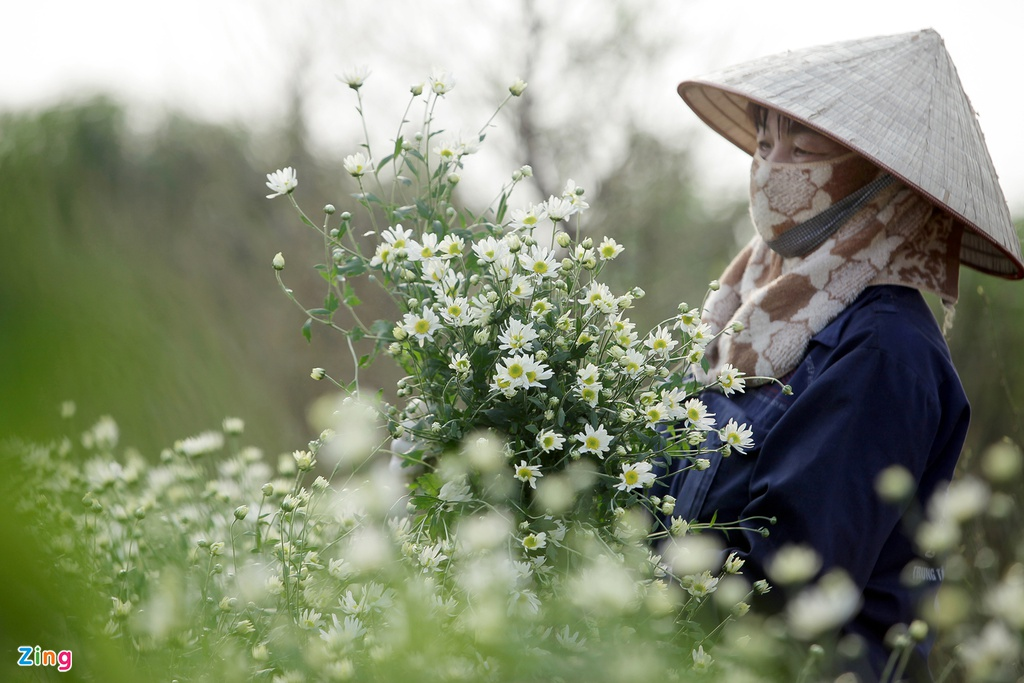 Cuc hoa mi no ro tu vuon ra pho hinh anh 4