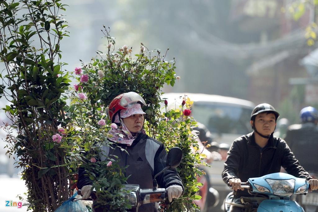Ot Nhat, tulip Ha Lan o cho hoa, cay canh lon nhat Ha Noi hinh anh 4