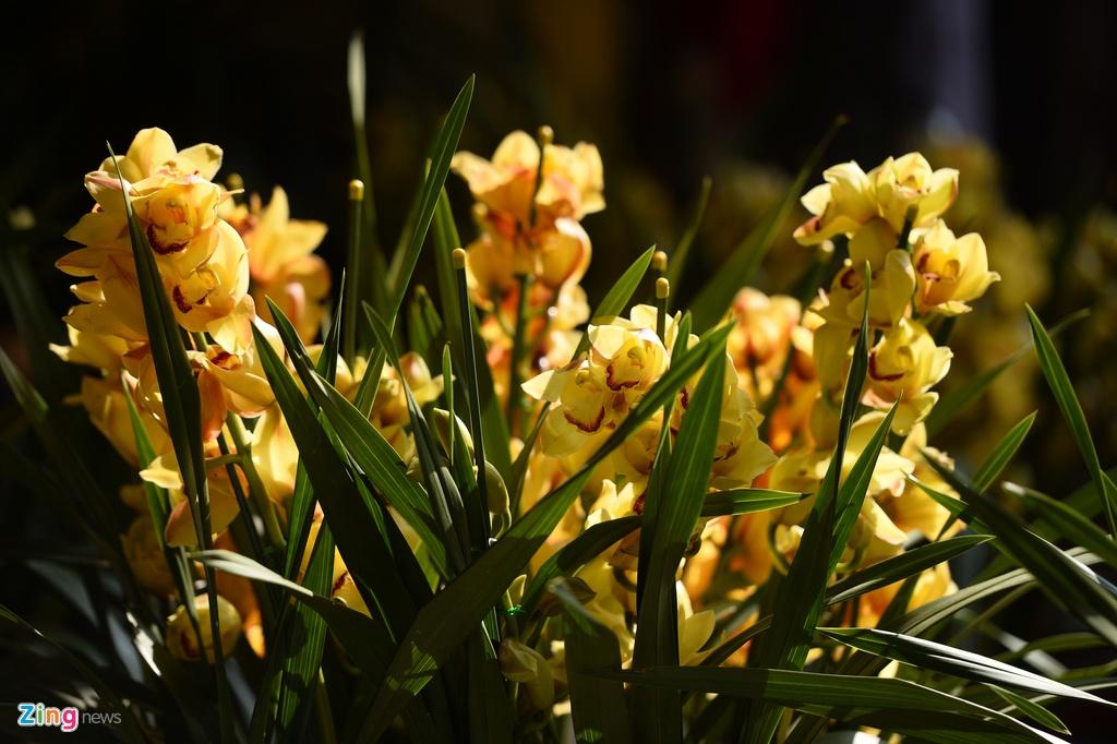 Ot Nhat, tulip Ha Lan o cho hoa, cay canh lon nhat Ha Noi hinh anh 18