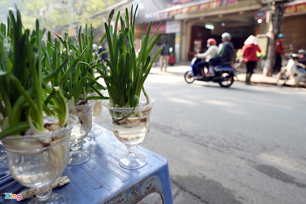 Ot Nhat, tulip Ha Lan o cho hoa, cay canh lon nhat Ha Noi hinh anh 20