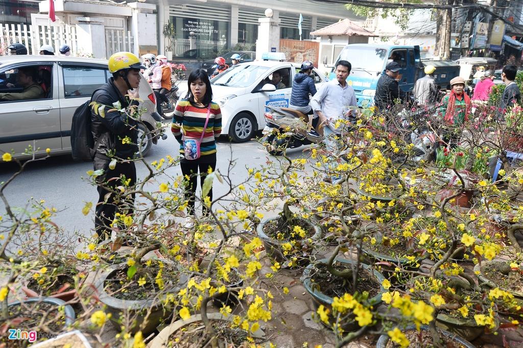 Ot Nhat, tulip Ha Lan o cho hoa, cay canh lon nhat Ha Noi hinh anh 7
