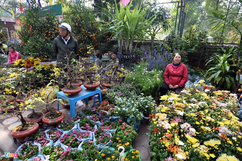 Ot Nhat, tulip Ha Lan o cho hoa, cay canh lon nhat Ha Noi hinh anh 8