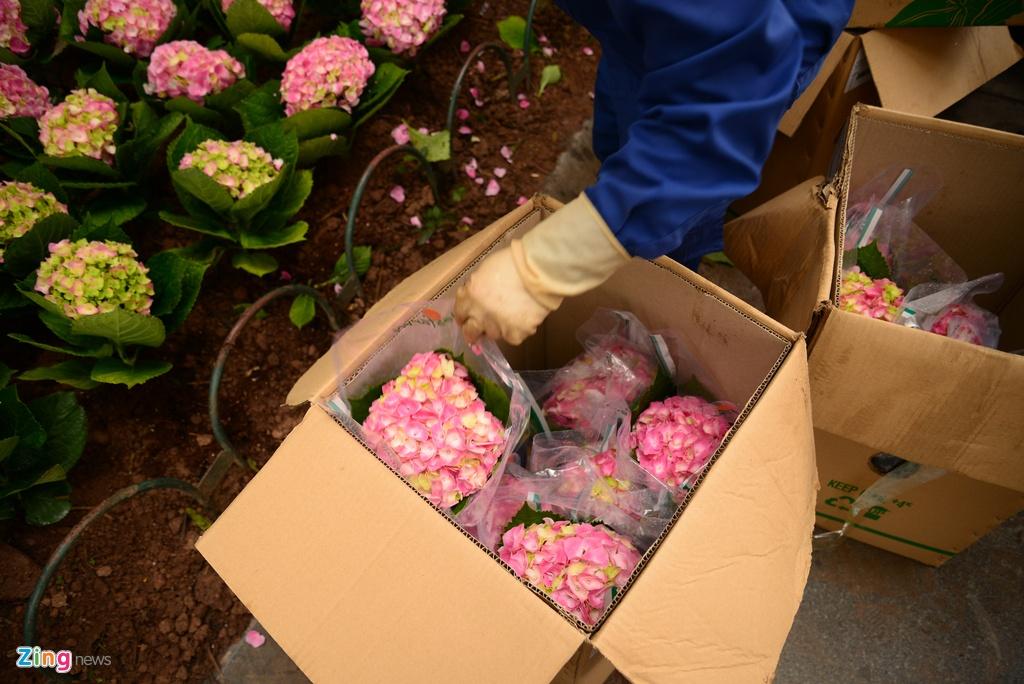 Ha Noi trong hoa don Tet, canh canh lo mat trom hinh anh 3 SHA_6839_zing.jpg