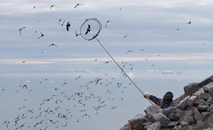 Bat chim bang vot de lam mon an boc mui kinh di o Greenland hinh anh 5