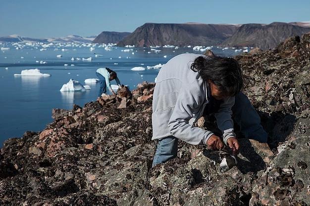 Bat chim bang vot de lam mon an boc mui kinh di o Greenland hinh anh 6