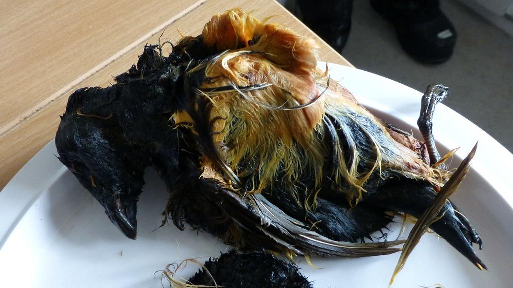 Bat chim bang vot de lam mon an boc mui kinh di o Greenland hinh anh 3